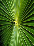 Closeup of Palm Leaves Royalty Free Stock Photos
