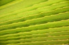 Closeup of palm trea leaf Stock Image