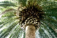 Closeup of a palm tree Stock Images