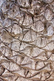 Closeup of Palm Tree Bark Royalty Free Stock Photos