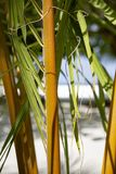 Closeup of palm tree royalty free stock photography
