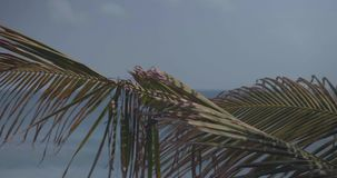 Closeup palm tree leaves against blue sea and sky background. Closeup plam tree leaves sway in the wind against blue sea water and sky background - video in slow stock video footage