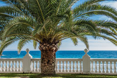 Closeup of palm tree at a tropical paradise with balustrade and ocean Stock Photos
