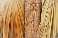 Closeup of a palm tree trunk and palm fronds stock photography