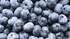 Closeup panning shot of fresh bilberry or blueberries, Stock Image