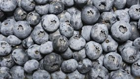 Closeup panning shot of fresh bilberry or blueberries, Royalty Free Stock Image