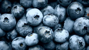 Closeup panning shot of fresh bilberry or blueberries, 4k. Closeup panning shot of fresh bilberry or blueberries, 4k stock video footage