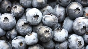 Closeup panning shot of fresh bilberry or blueberries, 4k. Closeup panning shot of fresh bilberry or blueberries, 4k stock footage