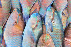 Closeup of parrot fish at market Royalty Free Stock Photography