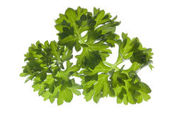 Closeup of parsley Royalty Free Stock Images