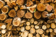Closeup pattern of cutting wood stack for background use Royalty Free Stock Photo