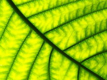 Closeup Pattern Of A Green Leaf Stock Photo
