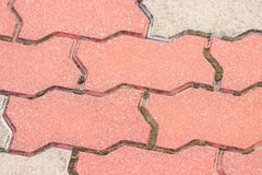 Closeup of paving stone with moss Stock Images