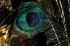 closeup of peacock feather Royalty Free Stock Photography
