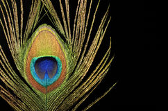 Closeup of peacock feather Royalty Free Stock Image