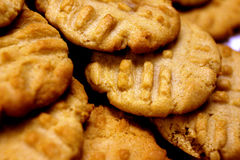 Closeup of Peanut Butter Cookies. Peanut Butter Cookies Closeup Freshly Bakes royalty free stock image