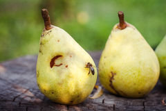 Closeup of  pears and bee Royalty Free Stock Images