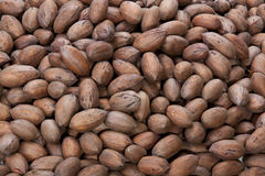 Closeup of Pecan Nuts Stacked in a Pile Stock Photography
