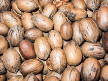 Closeup on pecan nuts stacked in a pile Stock Image