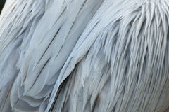 Closeup of pelican plumage Stock Photos