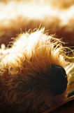 Closeup pet dog nose Royalty Free Stock Photos