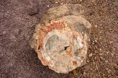 A closeup of petrified wood at a famous landmark in america stock photos