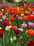 Closeup Photo of Assorted-colored Bed of Flowers Stock Photography