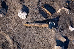 Closeup photo of assorted shells and driftwood pieces on dark sand from a Florida beach. Shells and driftwood on dark sand with overhead shadows for use as a Stock Images