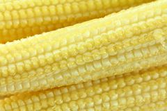 Closeup photo of baby corn (Candle corn) Stock Photo