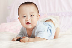 Closeup photo of beautiful cute Stock Images