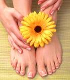 Closeup photo of a beautiful female feet with Stock Image