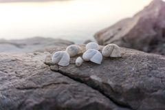 Beautiful Seashells on rocks next to seaside on the sunset stock photos