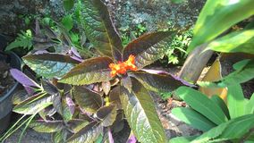 Orange flower blooms in garden Royalty Free Stock Photo
