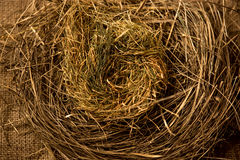 Closeup photo of birds nest made of straws Stock Image