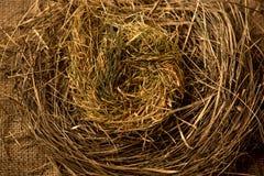 Closeup photo of birds nest made of straws Stock Image