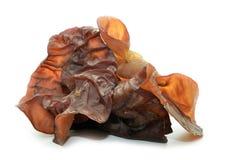 Closeup photo of black fungus. Jew`s Ear Mushroom royalty free stock image