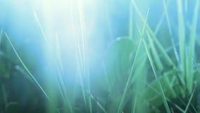 Closeup photo of blue fantasy grass stock video
