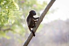 Closeup Photo of Brown Baby Monkey Stock Photo