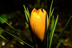 Closeup Photo of Brown Petaled Flower royalty free stock image