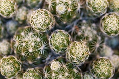 Closeup photo of a cactus Royalty Free Stock Image