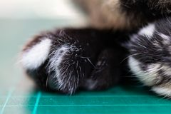 The cat foot. The closeup photo of the cat foot stock photography