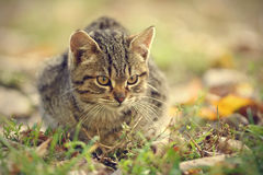 Closeup photo of cat in the park Royalty Free Stock Images