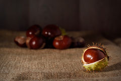 Closeup photo of a chestnut royalty free stock photography