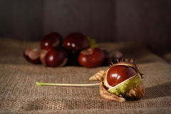 Closeup photo of a chestnut Stock Photos