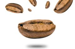 Closeup Photo of Coffee Bean Stock Image