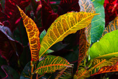 Closeup photo of colorful wild tropical leaves royalty free stock photos