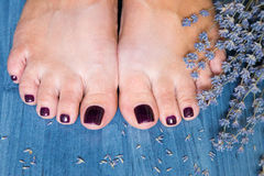 Closeup photo of a female feet with pedicure on nails and lavend. Er. at spa salon. Legs care concept Royalty Free Stock Images