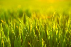 Closeup photo of fresh green grass Stock Images