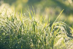 Closeup photo of fresh green grass Royalty Free Stock Images