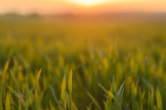 Closeup photo of fresh green grass Stock Image